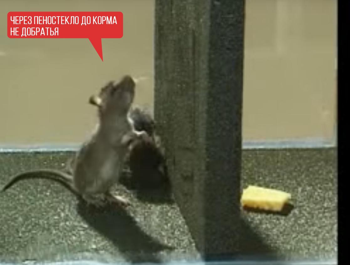 Утеплитель и мыши: честный обзор материалов, устойчивых к грызунам