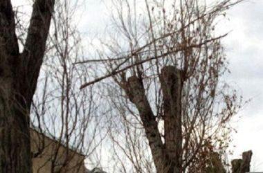 Куда обратиться, чтобы спилили дерево во дворе, под окном или у частного дома, кто занимается спилом с автовышки и крана, и законно ли за это требовать деньги?