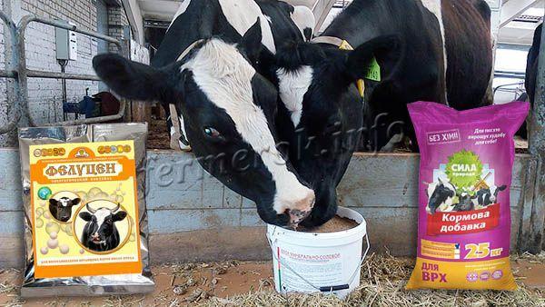 Откорм бычков на мясо: быстрые способы выращивания лучших мясных быков