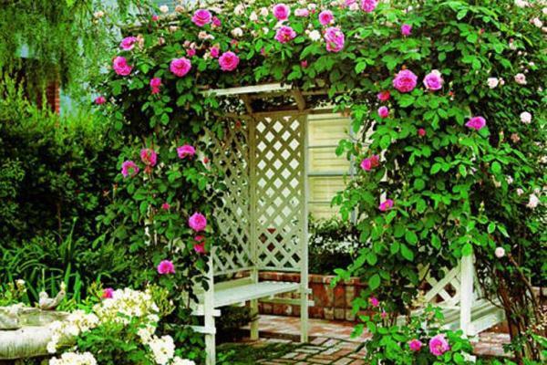 Многолетние лианы в саду, фото | сажаем сад
