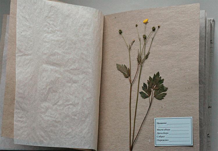 Оформление гербария для школы: полезные советы и интересные идеи