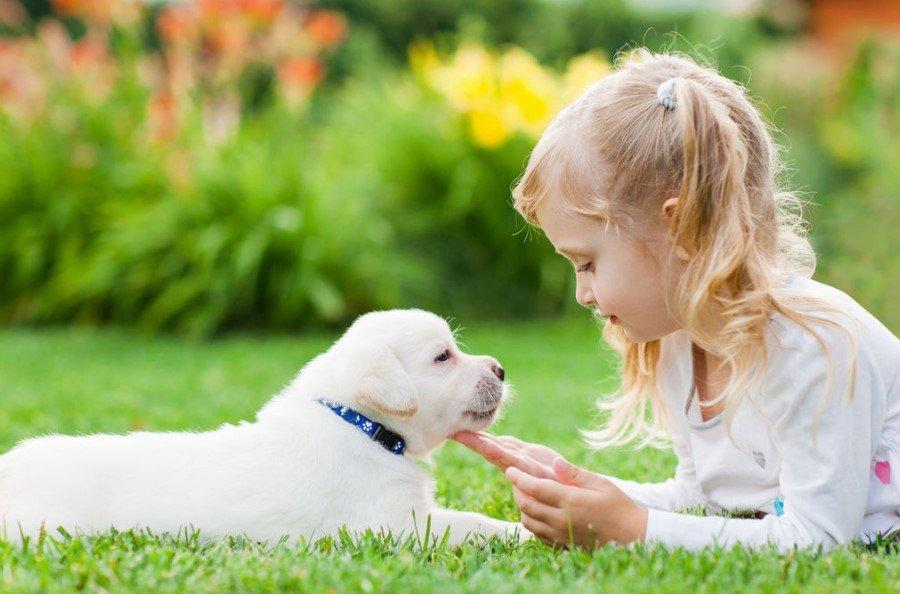 Топ-35 лучших пород собак для детей с фото