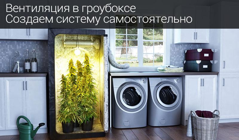 Растения для гроубокса