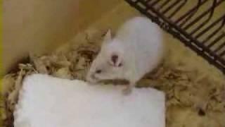 живут ли мыши в керамзите