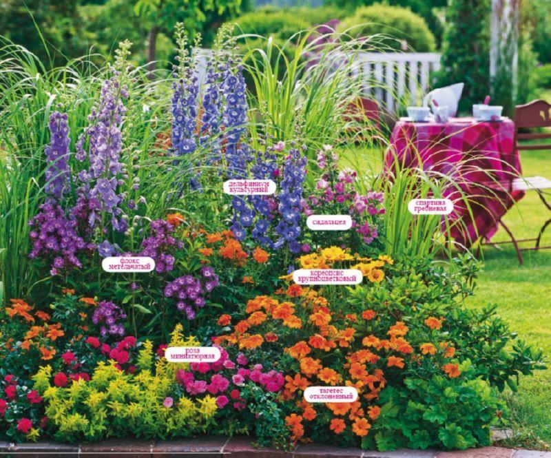 Клумба из многолетников непрерывного цветения: схемы всесезонного цветника