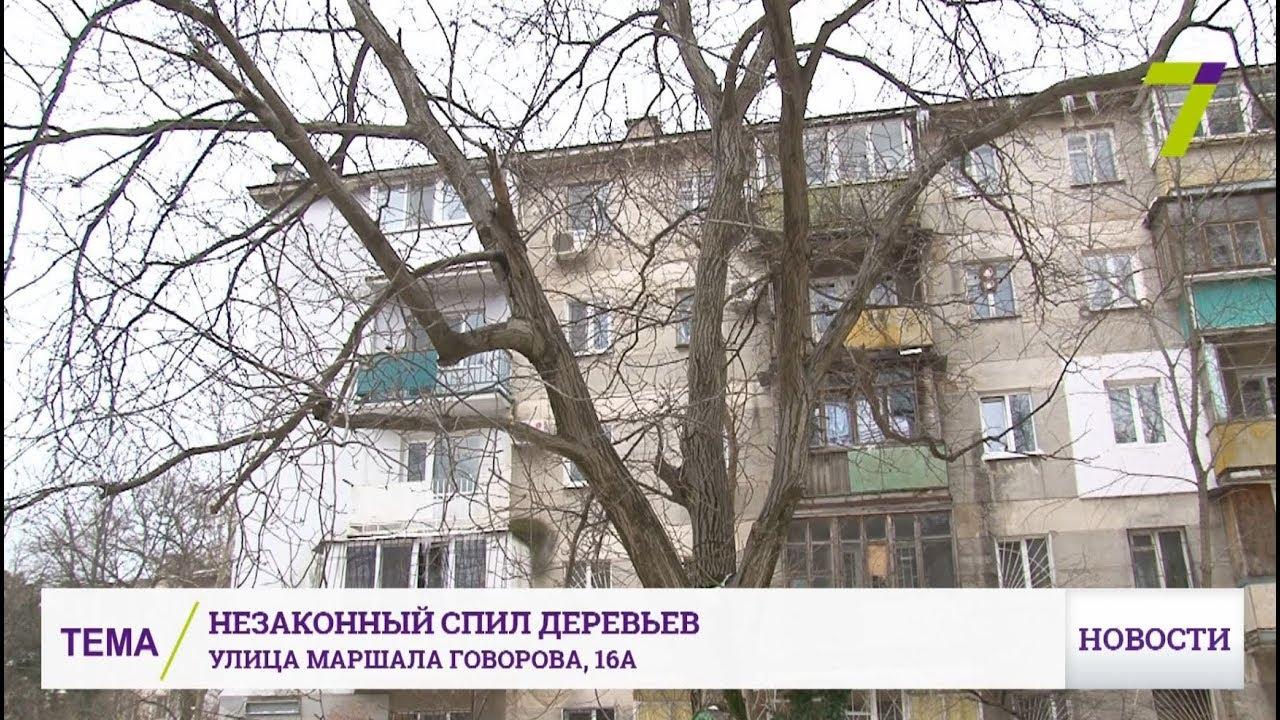 «закон о сборе валежника» разрешил беспрепятственно забирать из леса поваленные и высохшие деревья