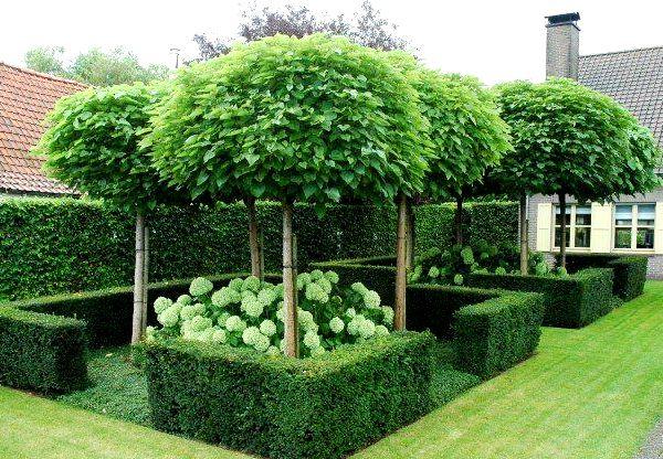 Дерево катальпа: описание, посадка и уход, особенности выращивания семя фото