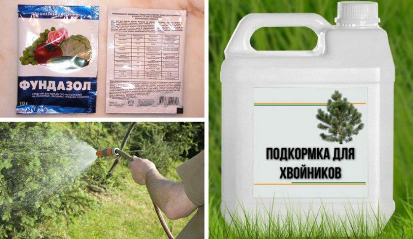 Как вырастить сосну из семян в домашних условиях: простая инструкция как посадить и подобрать семена сосны (110 фото)