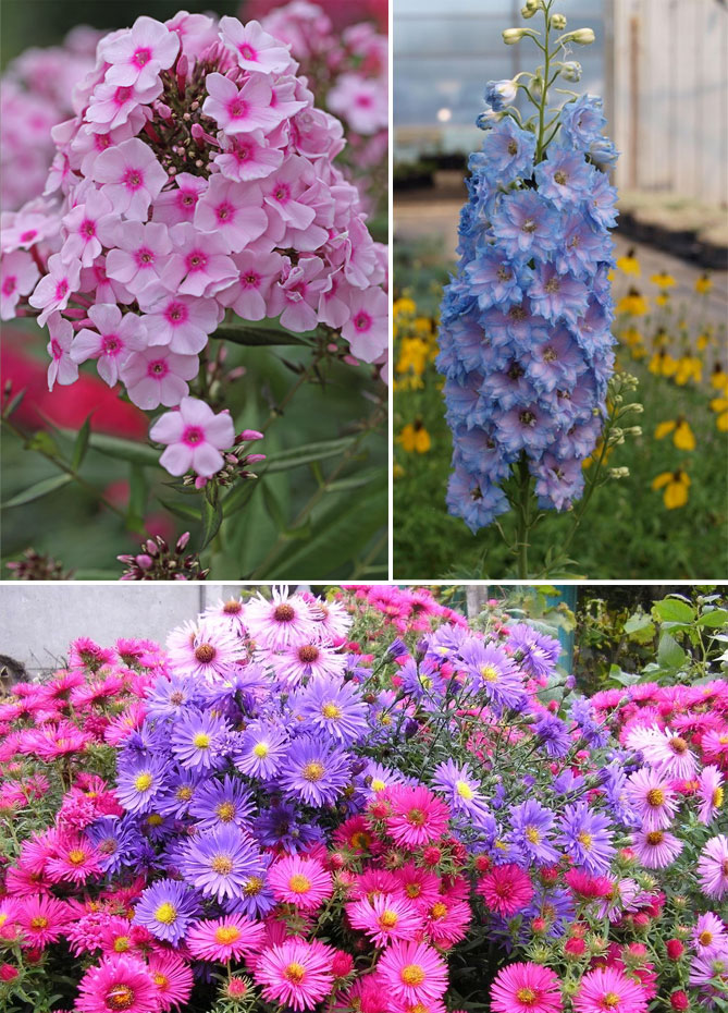 Цветы для клумбы - 66 фото оптимального подбора и сочетаний