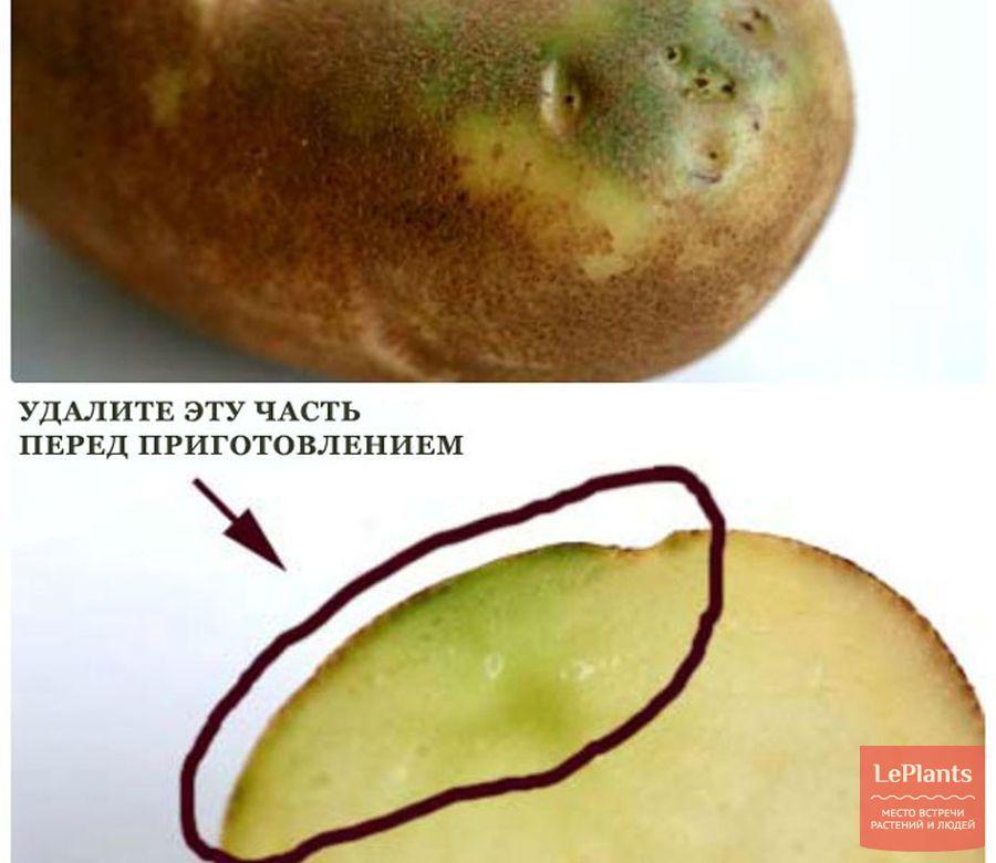 Как хранить картофель зимой, при какой температуре: в погребе, подвале и дома на балконе