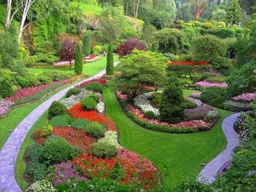 Самые популярные почвопокровные растения для сада, их особенности и виды